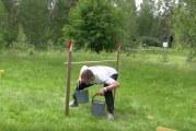 Video: TSN huomioi perinteikkään suomalaislajin – sankohiipimisen SM-kilpailut käydään tänään