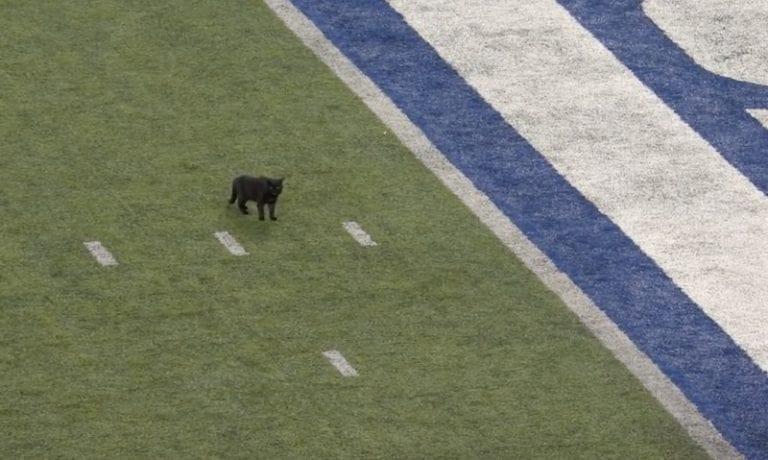 Video: Kissa keskeytti NFL-ottelun – selostajat osoittivat huikeaa pelisilmää