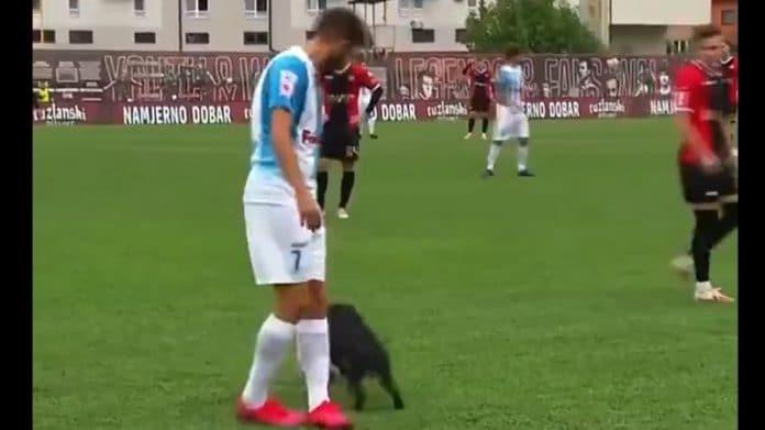 Koira kentällä Bosnian liigassa / Pallomeri.net
