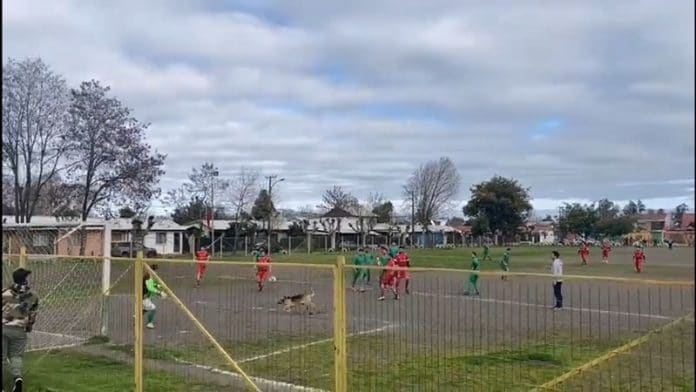 Koira tekee maalin Chilen alasarjassa / Pallomeri.net